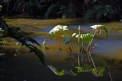 停滞水,伊蚊属Aegypt的扩散的来源 库存图片