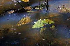 停滞水,伊蚊属Aegypti的扩散的来源 免版税图库摄影