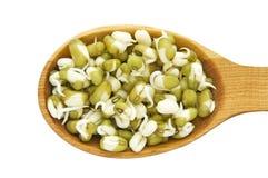 健康发芽的绿豆-新鲜和 库存图片