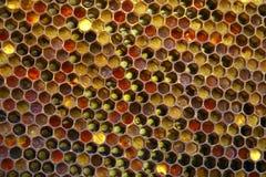 健康吃的蜂蜜 库存图片