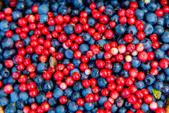 健康和可口有机蓝莓和cowberrys backgro 库存图片