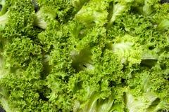 健康和新鲜的有机绿色卷曲沙拉特写镜头 库存照片