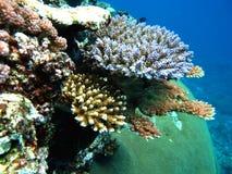 健康困难珊瑚 免版税图库摄影