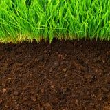 健康土壤 免版税库存图片