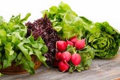 健康新鲜的沙拉成份 免版税图库摄影