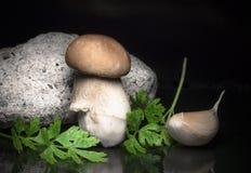 健康新鲜的蘑菇牛肝菌蕈类可食用新鲜的绿色荷兰芹和大蒜- 免版税库存图片