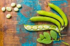 健康新鲜的豆类,在宽广的利马白豆的新的收获 免版税库存图片