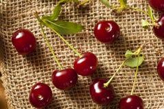 健康有机欧洲酸樱桃 免版税库存照片