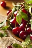健康有机欧洲酸樱桃 库存图片