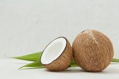 健康椰子,热带,秀丽温泉概念-接近椰树 图库摄影