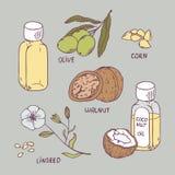 健康油集合 椰子、核桃、橄榄、玉米和油麻 库存照片