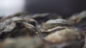 健康海鲜,特写镜头未加工的闭合的牡蛎形式海 股票录像