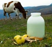 健康牛奶 免版税库存照片