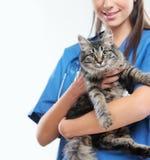 健康猫 免版税库存照片