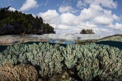 健康珊瑚礁和海岛 免版税库存图片