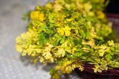 健康生活方式绿的草本香菜在白色背景中 免版税库存图片
