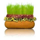 健康的汉堡包 免版税图库摄影