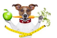 健康的狗 免版税库存照片