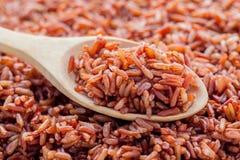 健康的蒸的整个五谷传统泰国米最佳的米 免版税库存图片