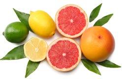健康的食物 与在白色背景隔绝的绿色叶子混合柠檬、绿色石灰、桔子和葡萄柚 与拷贝空间的顶视图 免版税库存照片