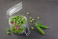 健康的食物 在开放玻璃瓶子的新鲜的绿豆有香豌豆花桃红色花的  图库摄影