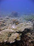 健康礁石 图库摄影