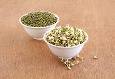健康素食食物发芽的Moong或蒙季在碗 免版税图库摄影