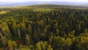 健康绿色树在老冷杉和杉木森林里  英尺长度 生态系和健康环境的概念 顶视图  图库摄影