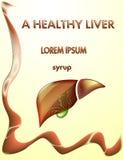 健康肝脏和胆囊 库存图片