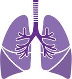 健康肺 库存图片
