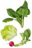 健康蔬菜 免版税库存图片