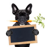 健康食物狗 免版税库存图片