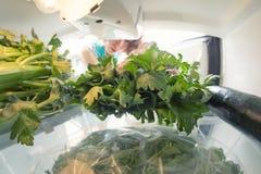 健康饮食:从开放冰箱的手劫掠的芹菜充分绿色 免版税库存照片