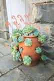 健康绿色多汁植物 免版税库存照片