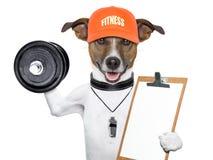 健身狗 免版税库存图片