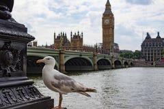 偶象伦敦和海鸥都市风景  免版税图库摄影