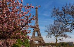 偶象艾菲尔铁塔在巴黎在樱花后的一个晴朗的春日 免版税库存照片