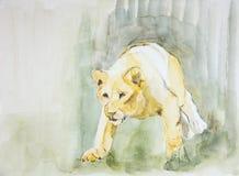 偷偷地走往牺牲者的雌狮 库存照片