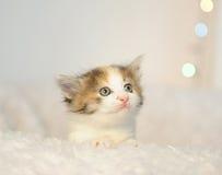 偷看在一把白色蓬松椅子外面的小的逗人喜爱的小猫 抽象背景背景blurr被弄脏的明亮的庆祝圣诞节关闭颜色装饰defocused火明亮地强制了节假日被阐明的图象光照明设备光晚上夜生活没人充满活力的黄色的装饰品当事人模式红色场面街道技术 球圣诞节查出的心情三白色 免版税库存照片