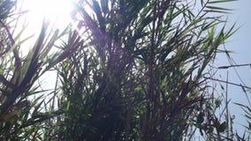 偷看在植被之间的太阳 影视素材
