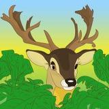 偷看在绿色灌木外面的鹿的头在森林, cartoo里 图库摄影