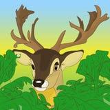 偷看在绿色灌木外面的鹿的头在森林, cartoo里 免版税库存图片