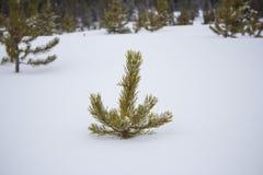 偷看在雪外面 免版税库存照片