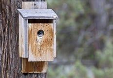 偷看在鸟舍外面的树燕子 免版税库存图片