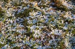 偷看通过冬天的第一个雪秋天的草 库存照片