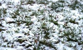 偷看通过冬天的第一个雪秋天的草 免版税库存照片