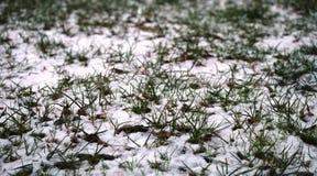 偷看通过冬天的第一个雪秋天的草 免版税图库摄影