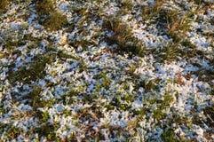 偷看通过冬天的第一个雪秋天的草 库存图片