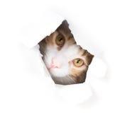 偷看通过在纸的一个孔的哀伤的猫 免版税库存图片