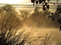 偷看通过树的太阳光芒 免版税库存照片